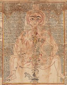 Yogi-Physiology
